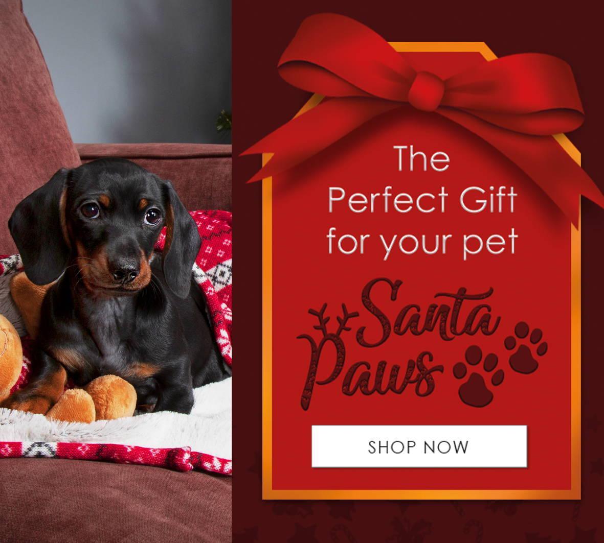 scruffs santa paws