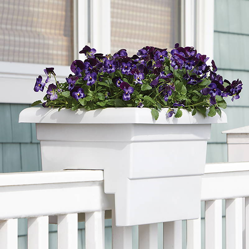Purple flowers growing in a white countryside railing planter