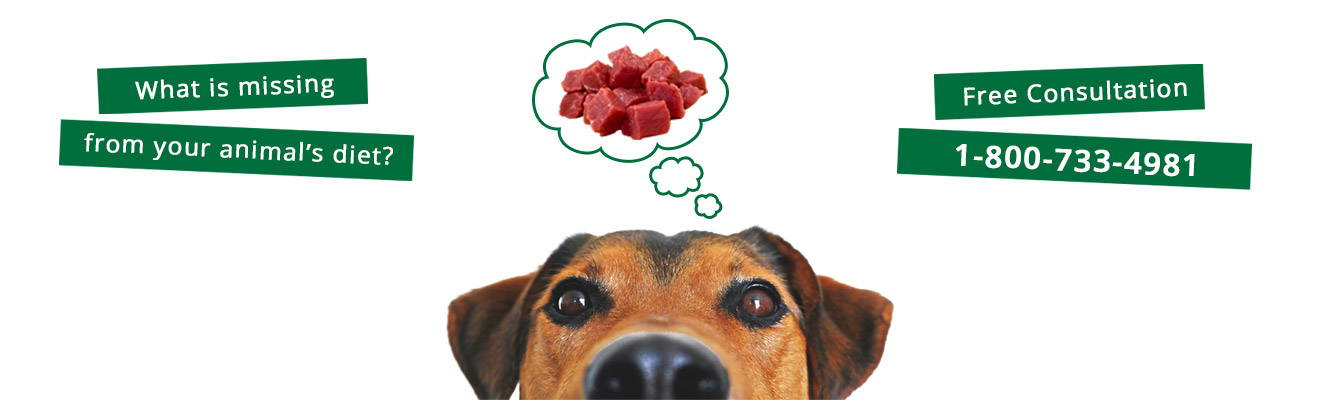 What's missing from your animal's diet? Get free consultation