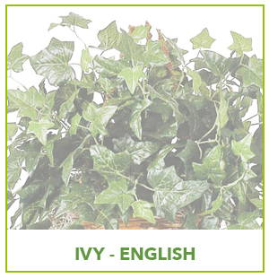 ARTIFICIAL ENGLISH IVY PLANTS