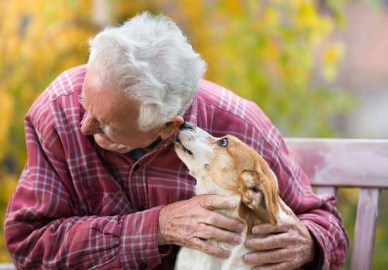 old man on a bench with a dog licking his ear