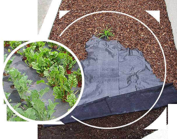 Ecogardener landscape fabric in the garden