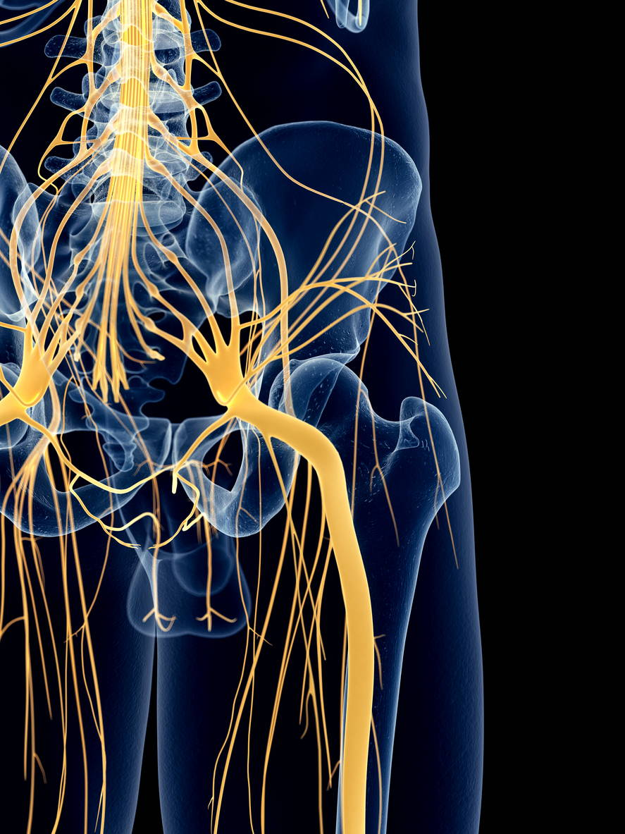 An X-Ray showing the nerves of a male huma