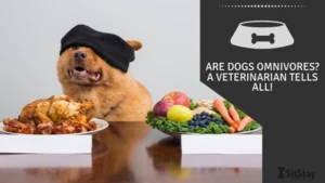 Are dogs omnivores? A veterinarian tells all!