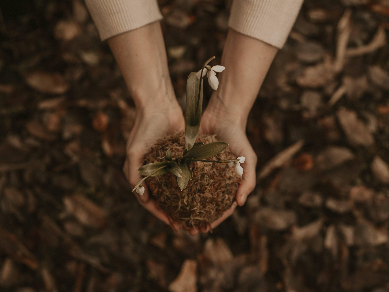 como cuidar una orquidea