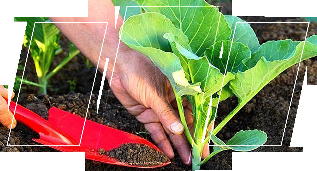 Adding fertilizer to a plant
