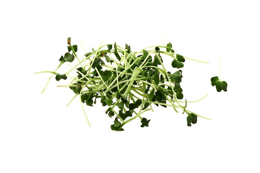 UMAMI Rettich Microgreens