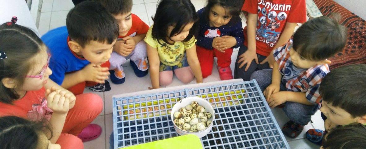Kids Enjoying Quail Cage - Hatching Time