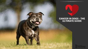 Cancer in Dogs. The Ultimate Guide