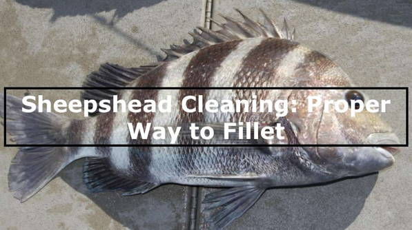 Guide For Cleaning Sheepshead