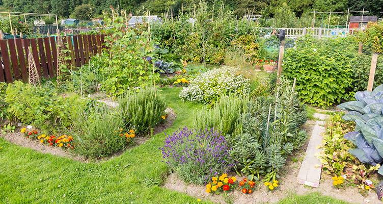 piante nell'orto