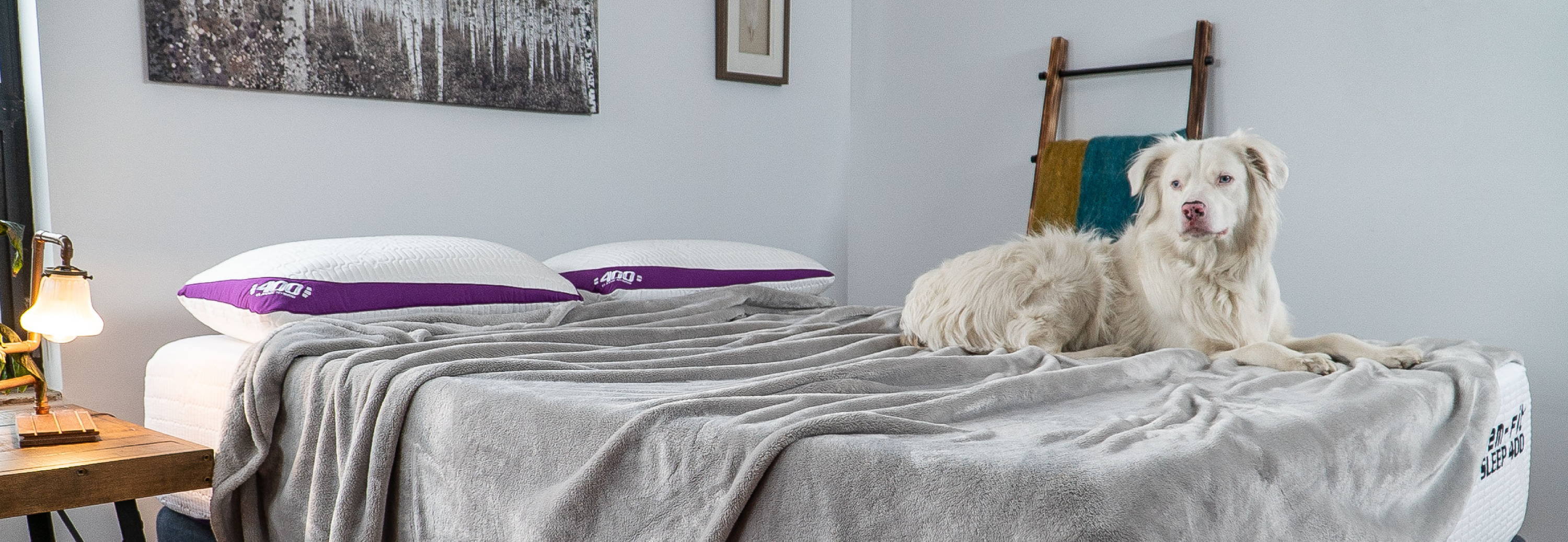 What Type of Mattress is Best for Me? dog on advanced cooling memory foam mattress