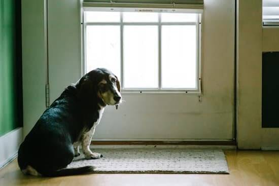 a black and white dog sitting by a door