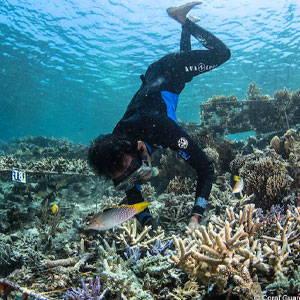 Coral Guardian Team Member restoring corals
