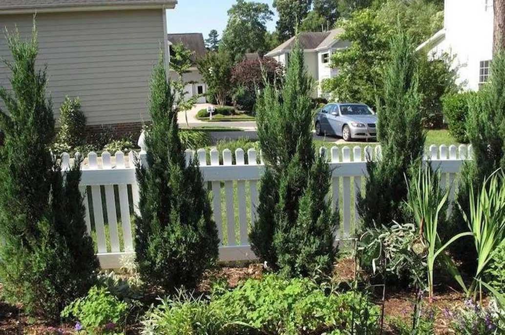 dwarf-trees-for-zone-7