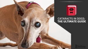 Cataracts in Dogs: The Ultimate Guide
