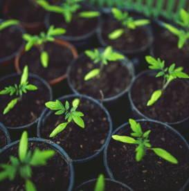 go-green-mini-plants-in-pots