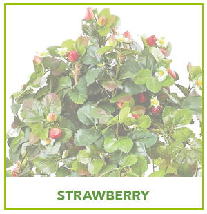 ARTIFICIAL STRAWBERRY PLANTS