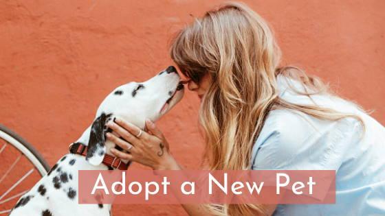 adopt a new pet