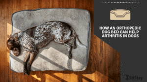 How an orthopedic dog bed can help arthritis in dogs
