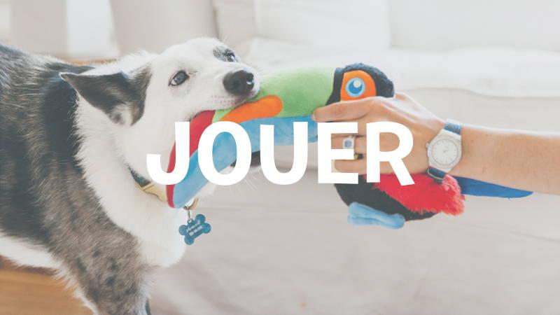 inooko-jouer-avec-son-chien