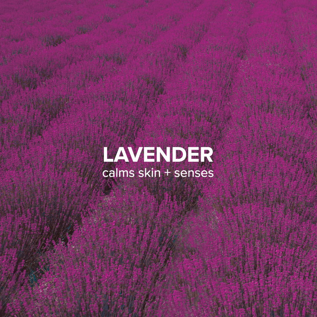 Laverder oil benefits on skin | Lavender benefits for skin | Lavender for acne