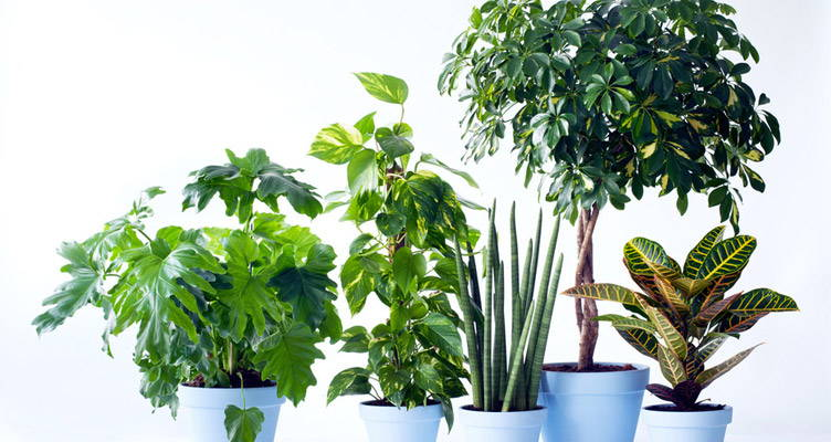 Indoor Plants: Plants for Men