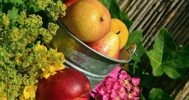 Taille des fruitiers pour stimuler la production de fruits