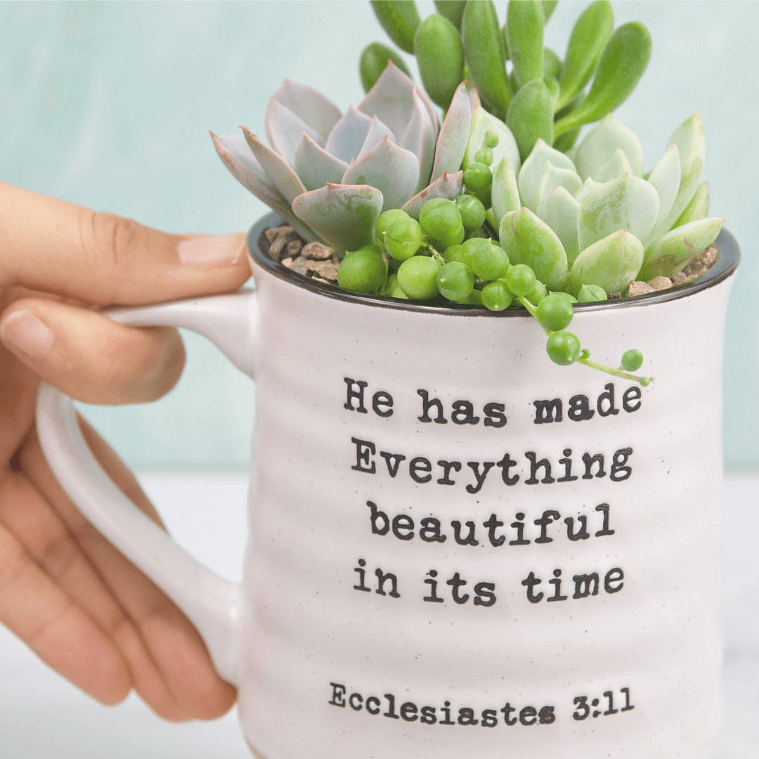 Succulent Gifts and Merchandise
