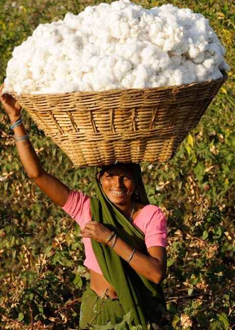 farmer in india with basket of organic cotton