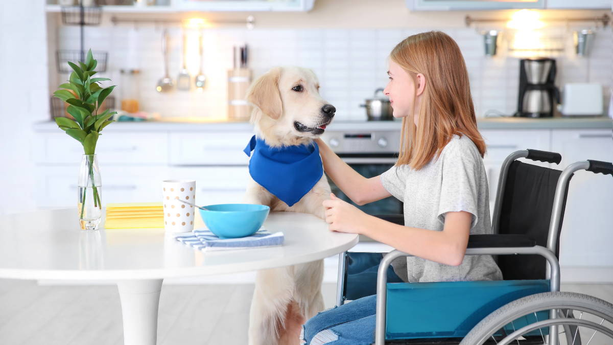 A girl in a wheelchair sits at a table and pets a service dog wearing a bandana