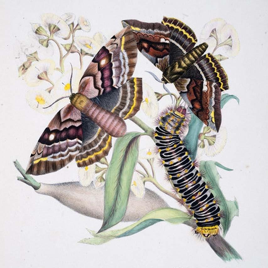 Helena Scott Art