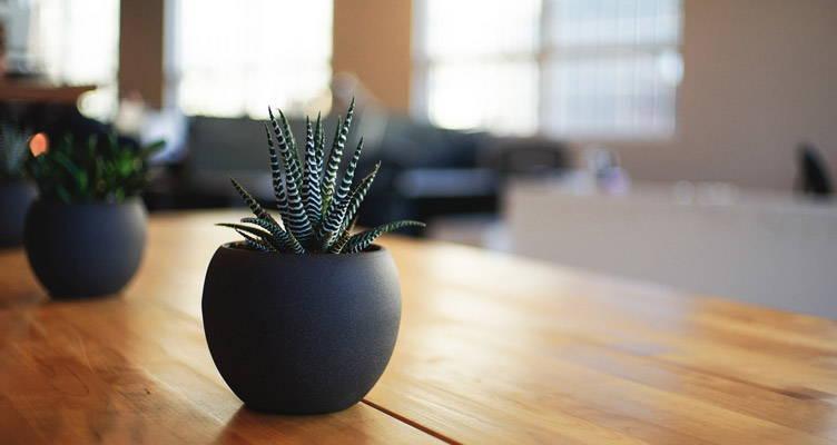 Les plantes d'appartement qui transforment votre entourage