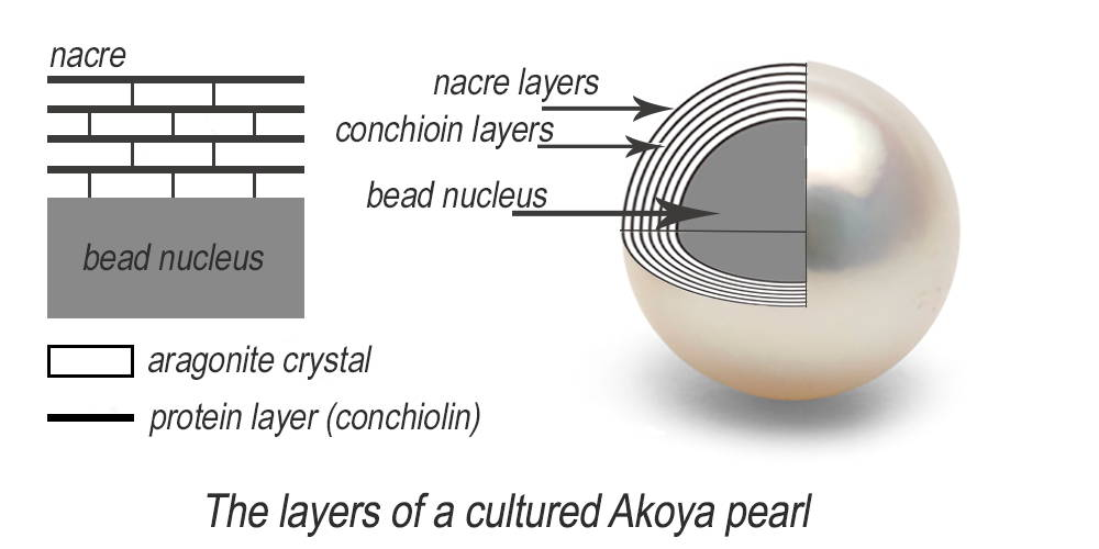 Cross section of Akoya pearl nacre diagram