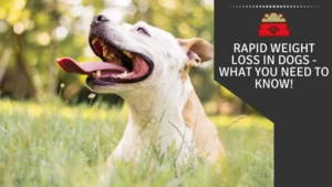 Rapid Weight Loss in Dogs - what you need to know