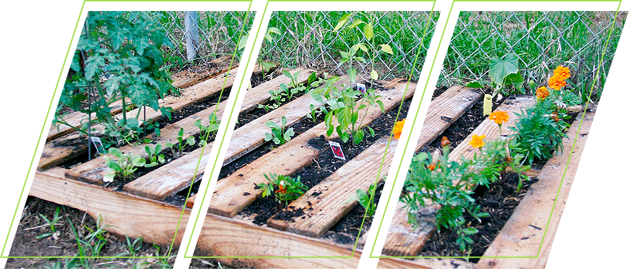 Using pallet as a planter