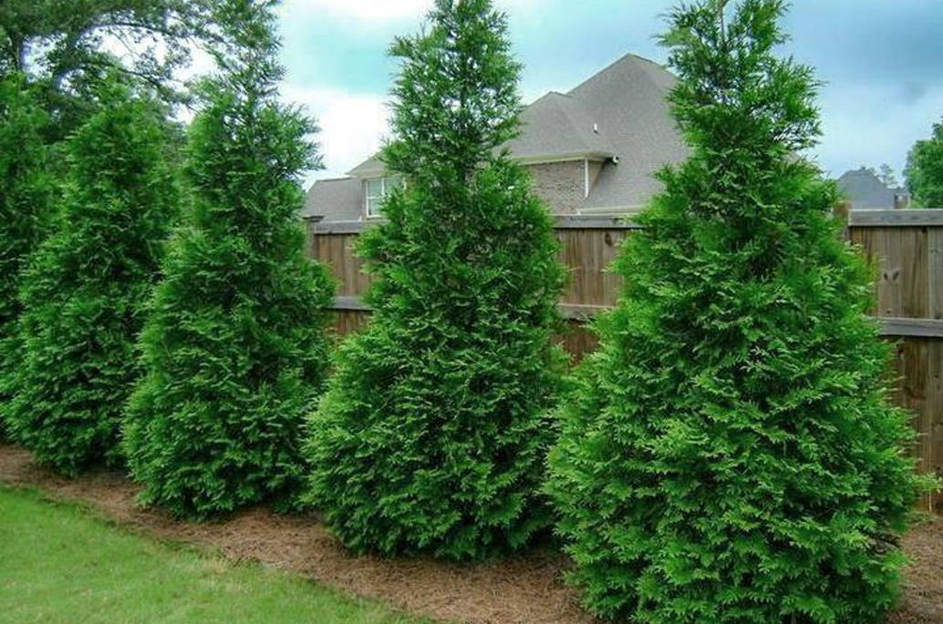 Large Privacy Trees