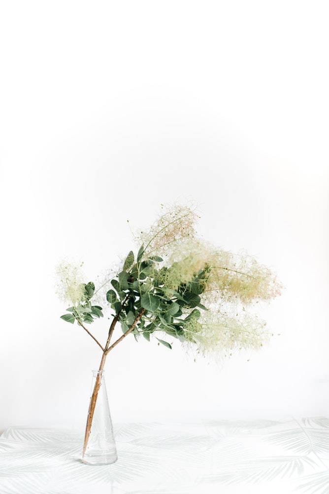 organic eucalyptus plants in a glass vase