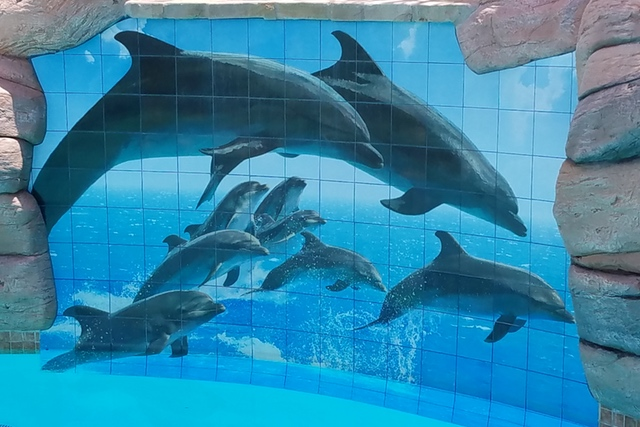 ceramic tile photo mural custom mosaic - jumping dolphins