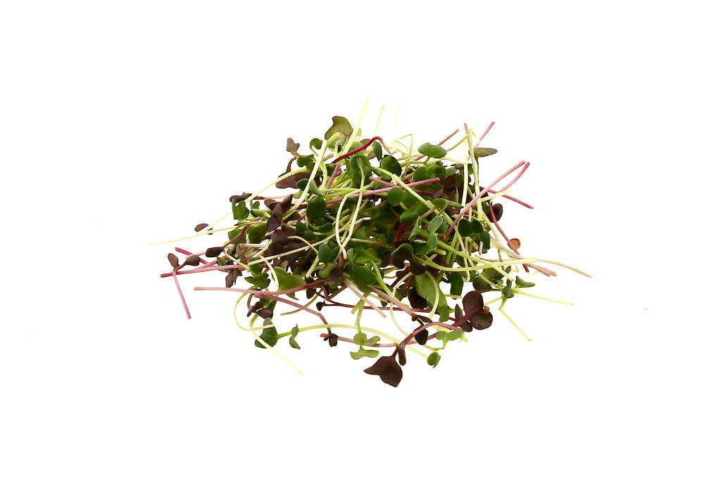 Querbeet Microgreen Mix
