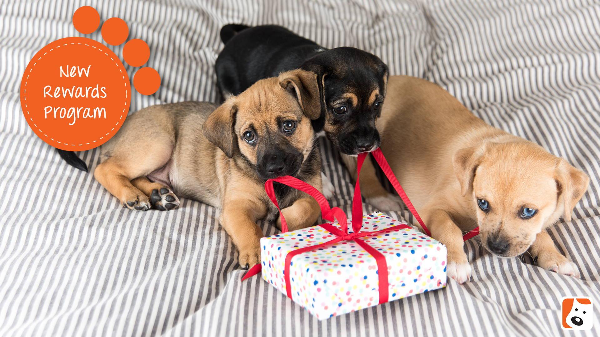 Boneo Canine Rewards