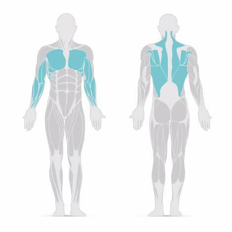 Klimmzüge trainierte Muskeln
