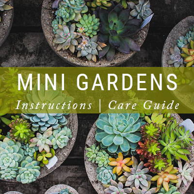Mini Garden Instructions | Care Guide