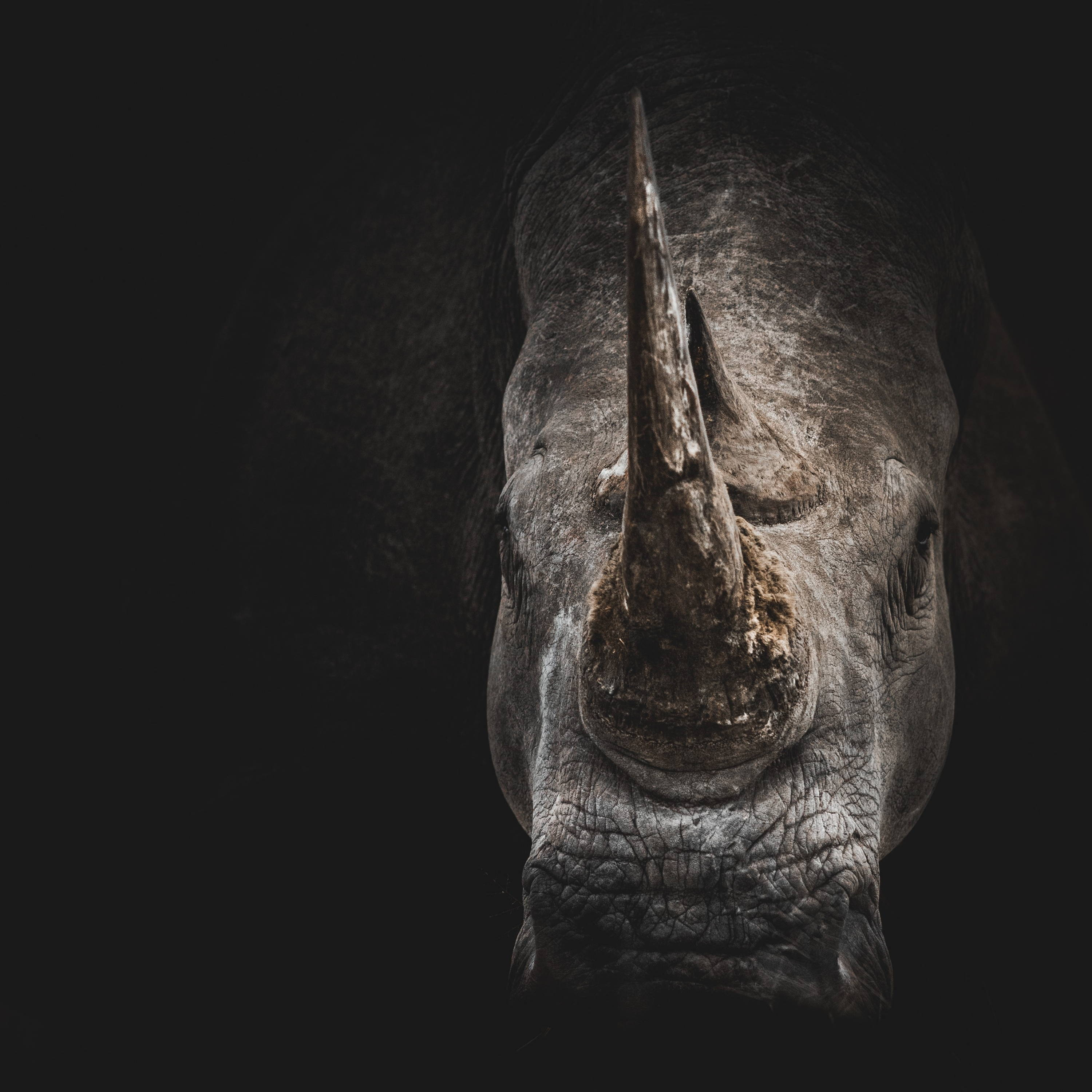 A portrait photo of a rhino with black background