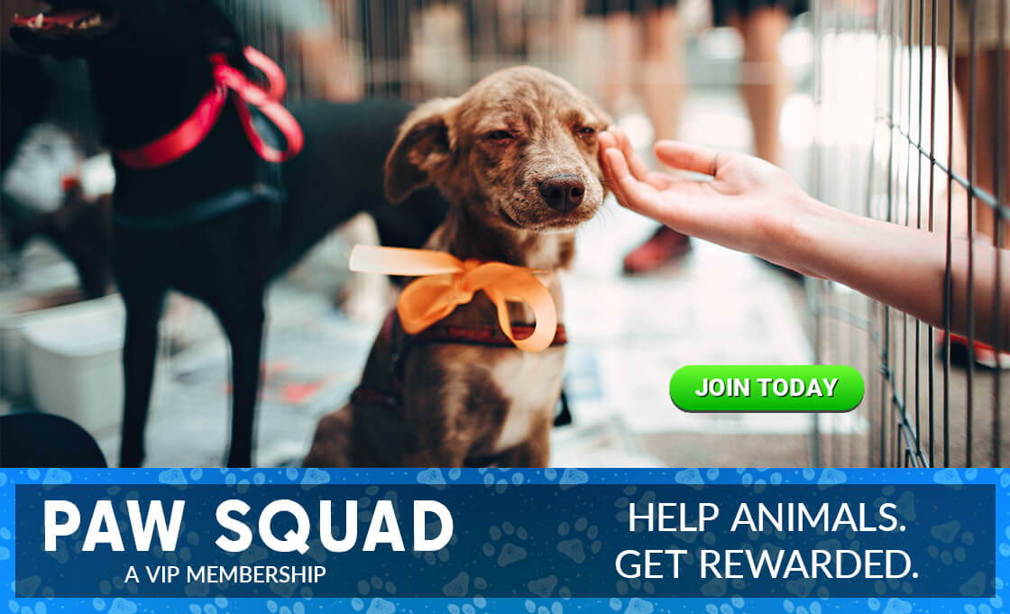 Paw Squad VIP membership. Help animals and get rewarded
