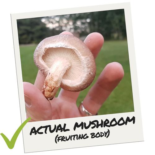 real-mushroom-fruiting-body