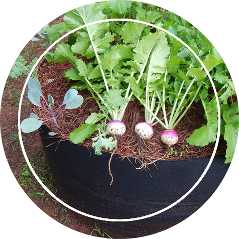 Grow bag with onions shown on top