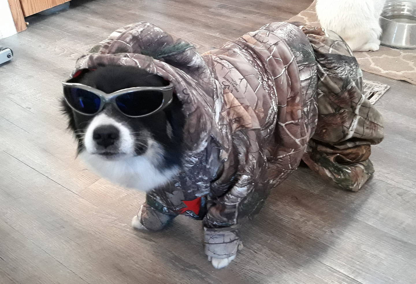 dog wearing sunglasses and camo sweatshirt