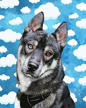 husky in the clouds