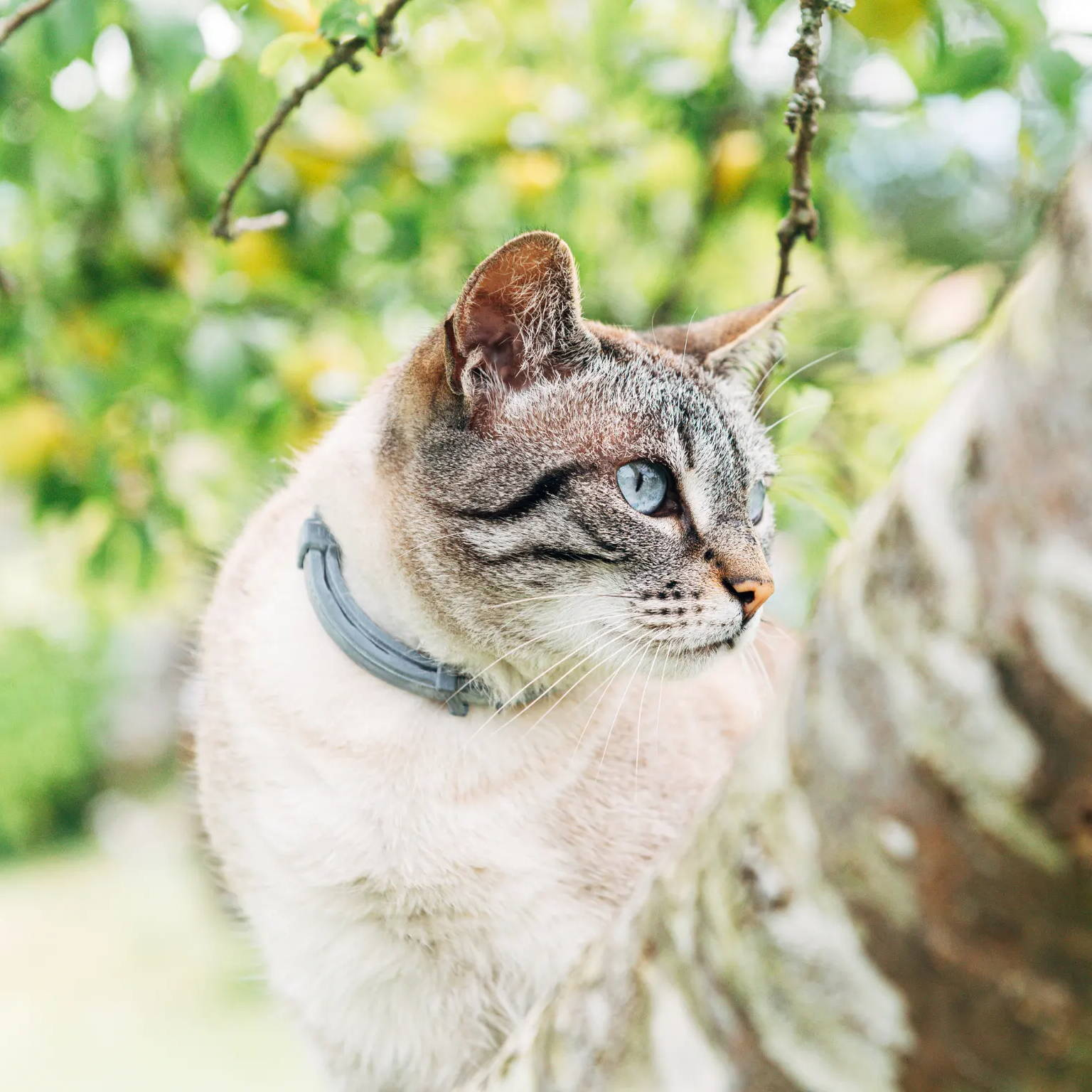 cat with a seresto collar
